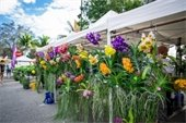 A variety of colorful orchids hanging from tents